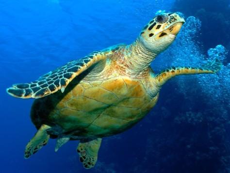 image-turtle